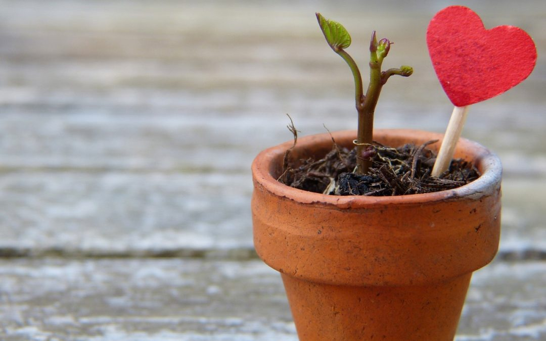 Planting Hope and Action to Grow a Better You in 2019